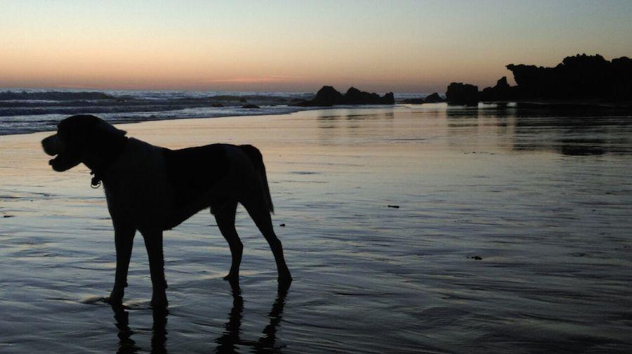 Beagle hondartzan ilunkaran, 2014ko abuztuan, Conilen. EGILEA: Beatriz Cantera (Eskoriatza)
