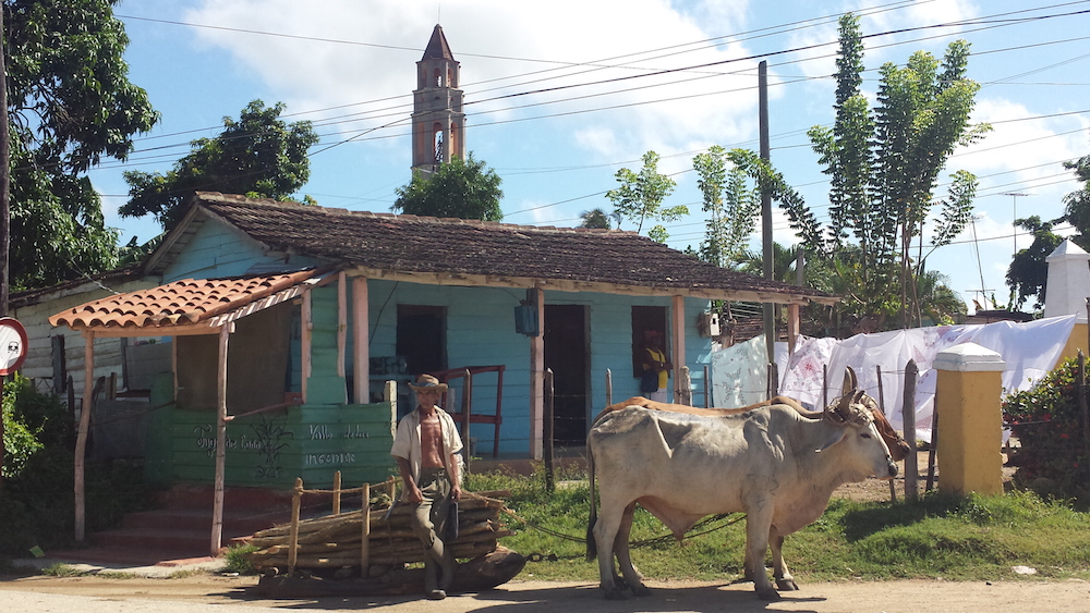 EL VALLE DE LOS INGENIOS | Ilia Etxeberria (Aramaio). Bertako abeltzaina haren idiekin atseden hartzen.