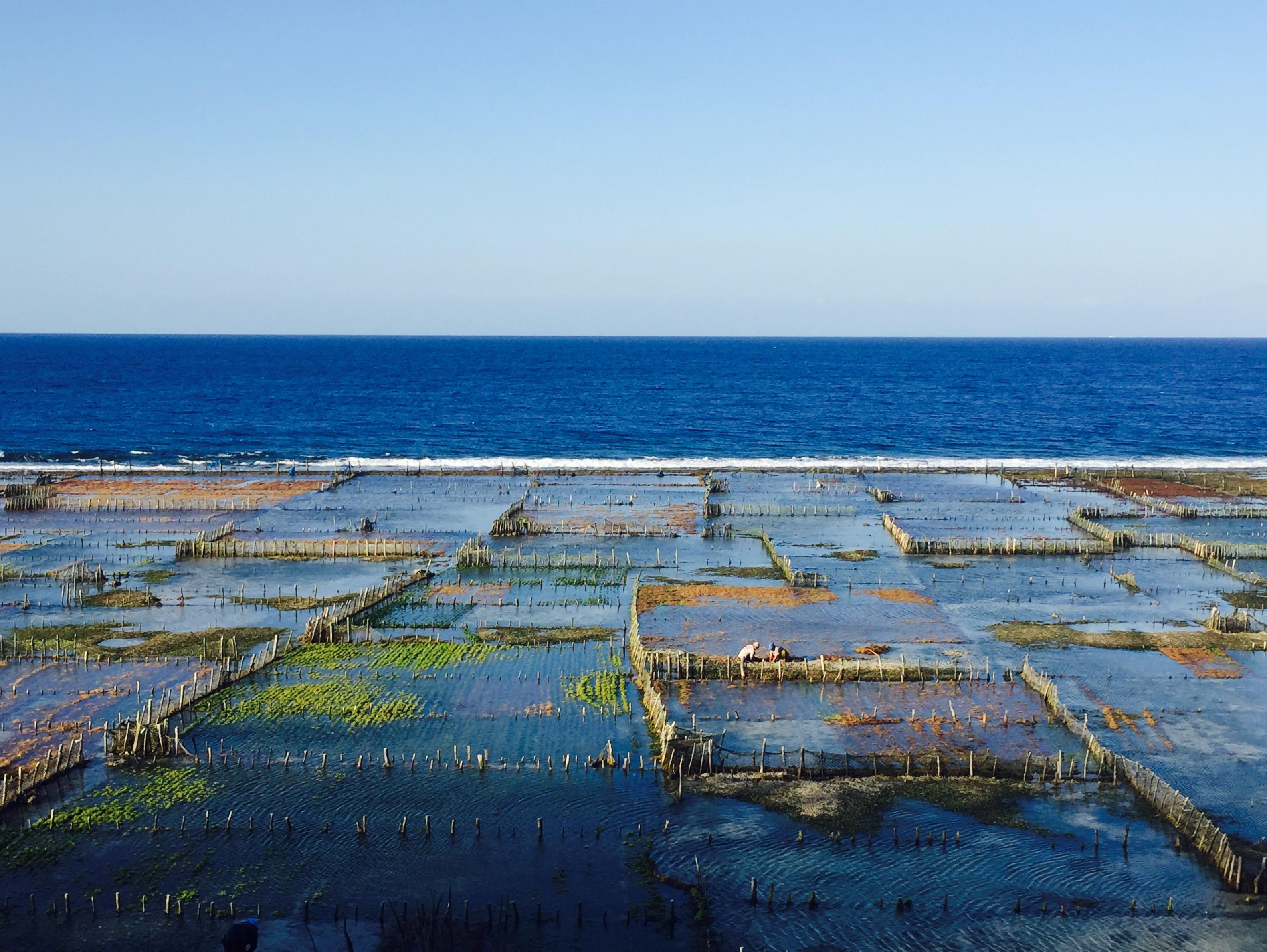 INDONESIA - Eneko Ugarte (Oñati). Nusa Penida irlan, marea jaistean ageri diren alga plantazioak eta bertako jendea lanean.