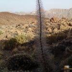 227 - Udaberrian lorez, udan batez