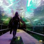 107 - Donostiako Aquariuma
