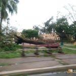 339 - Santa Clara inguruan Irma urakanaren ondorioak 2