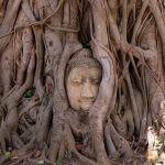 86 - Buda besarkatzen duten sustraiak