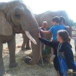 293 - Elefantea laztantzen