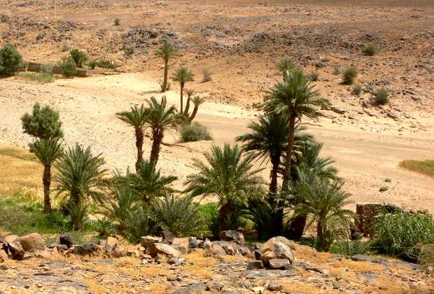 oasia