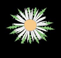 zaharberri